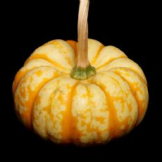 Pumpkin Sweet Lightning 10 Seeds